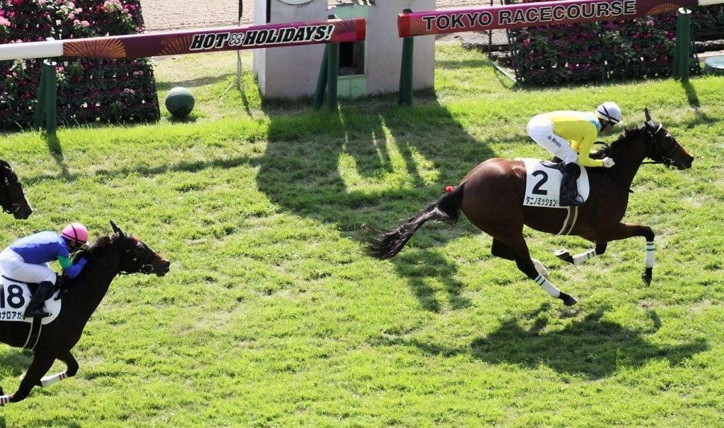 ウオッカの子、初の新馬勝ち